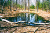 Vernal_pool_association_1_1